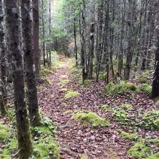 Chebogue Meadows Trail through woodland