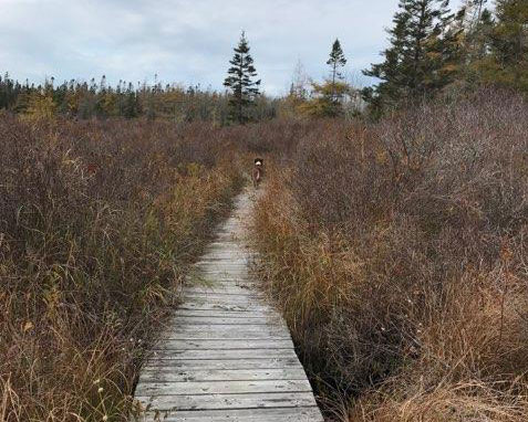 Boardwalk in Chebogue Meadows Trail