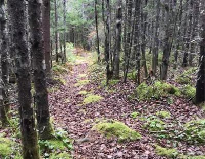 Family Hiking: Want a challenge?
