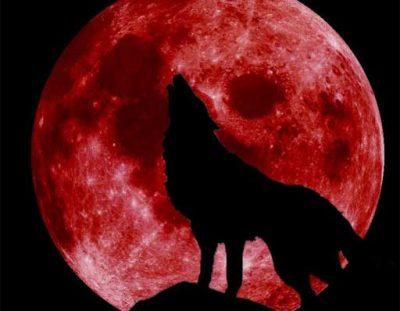 Super Blood Wolf Moon Hike